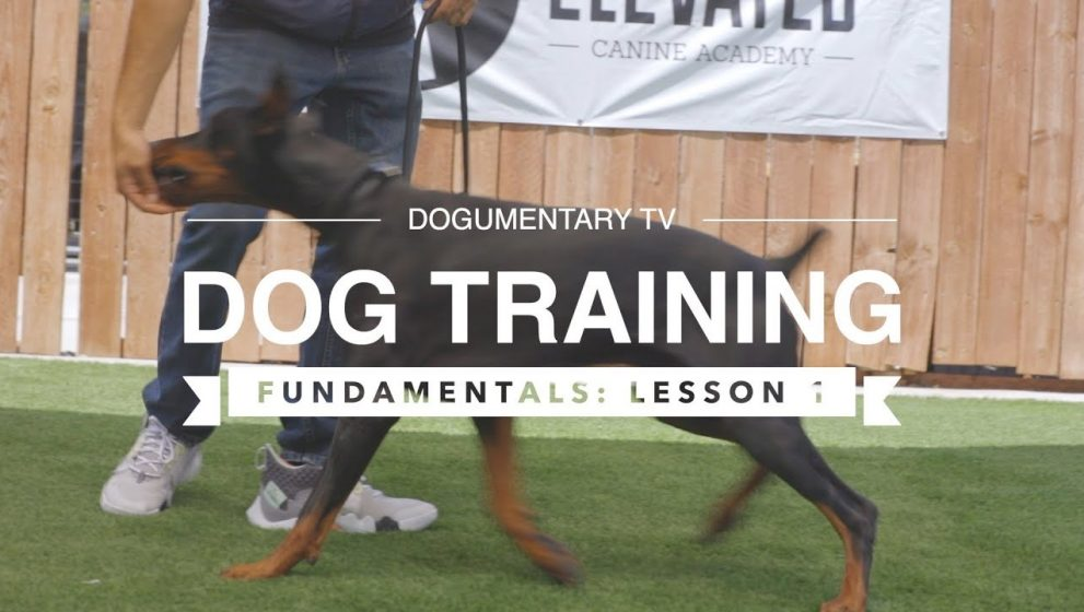 Struggling With Puppy Training? Try Using Some Of These Great Tips